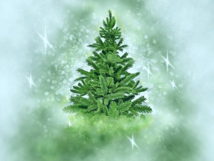 Kerstbomen Verkoop Hallo Losser